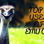 Top 10 Uses and Benefits of Emu Oil – Emu Oil For Skin, Hair and Body