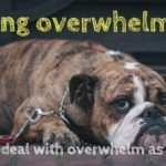 Feeling overwhelmed? 8 Tips to deal with overwhelm as a blogger