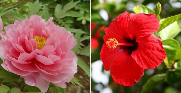 11 Edible Flowers Having Amazing Medicinal Uses and Benefits