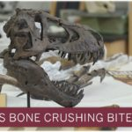 How Much Force Is in a T. Rex Bite? Enough to Explode Bones – Vision Times