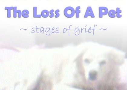 How to Deal with the Loss of a Pet and Understand the Stages of Grief