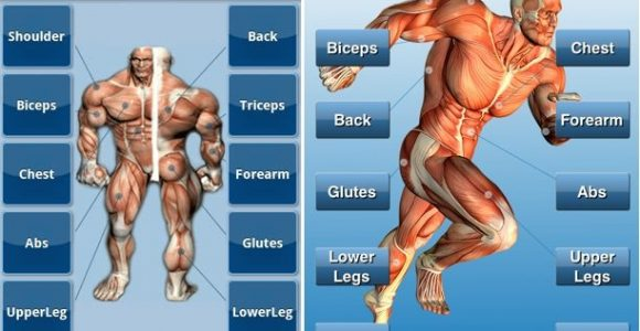 Top 5 iPhone Bodybuilding Apps