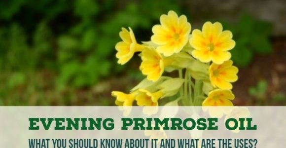 Evening Primrose Oil: What you should know about it and what are the uses?