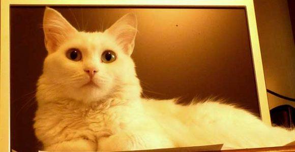 10 Best Virtual Pet Sites