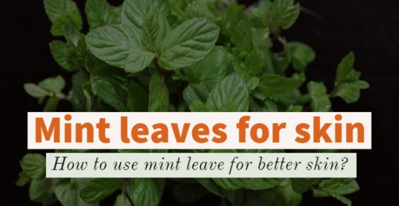 Mint leaves for skin: How to use mint leave for better skin?