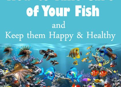 How to Take Care of Your Fish and Keep them Happy & Healthy