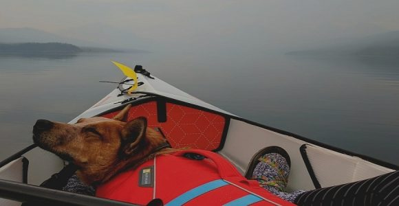 How to Kayak with Your Dog: Things to Consider
