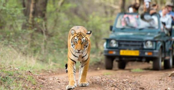 Top 5 National Parks Of Rajasthan