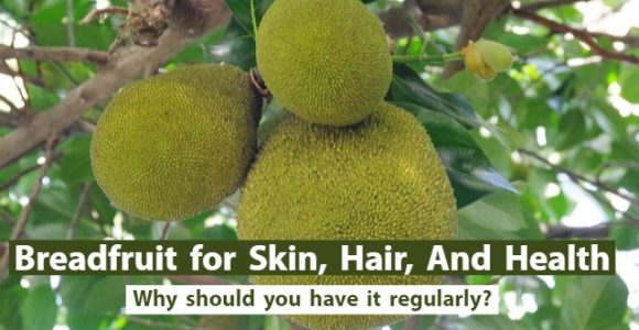 Breadfruit for Skin, Hair, And Health: Why should you have it regularly?
