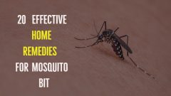 20 Effective Home Remedies for Mosquito Bites