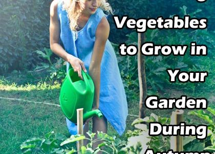 8 Vegetables to Grow in Your Garden During Autumn
