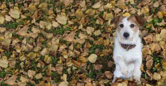 9 Easy Tricks to Teach Your Dog