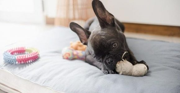 3 Types of Toys Your Dog Must Have