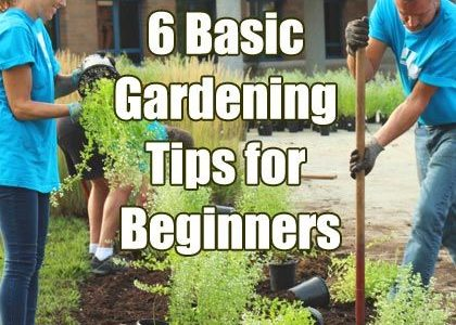 6 Basic Gardening Tips for Beginners