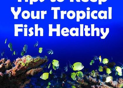 Tips to Keep Your Tropical Fish Healthy