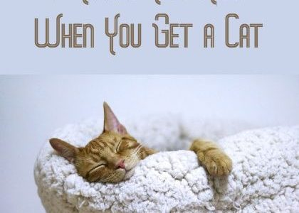9 Things You Need When You Get a Cat