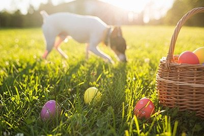 6-Step Guide to Setting Up an Easter Egg Hunt for Dogs