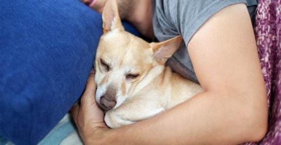 8 Dog Sleeping Positions & What They Mean | Dog Care | DoggyBlogger