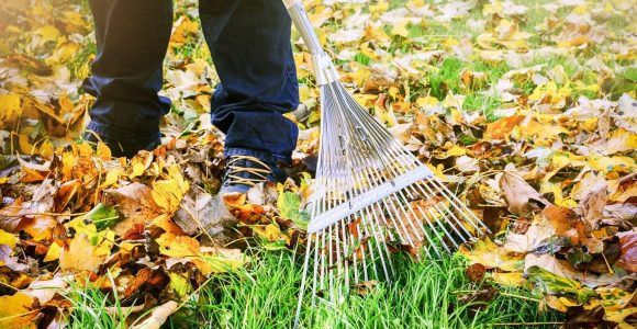 Green Waste Management Myths Debunked