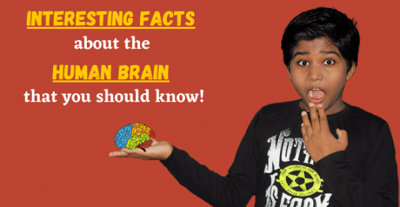 Interesting facts about the human brain that you should know! – Funfortainment