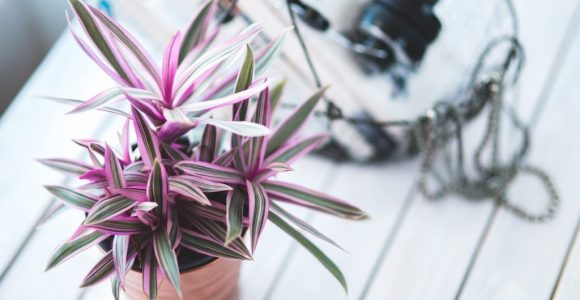 Uplift Your Home with These 7 Air Purifying Indoor Plants | GetSetHappy