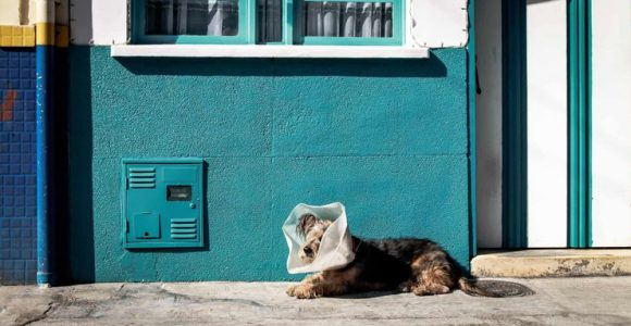 Mobile App for Online Vet Consultations and Prescriptions: A New Frontier for Veterinary Clinics