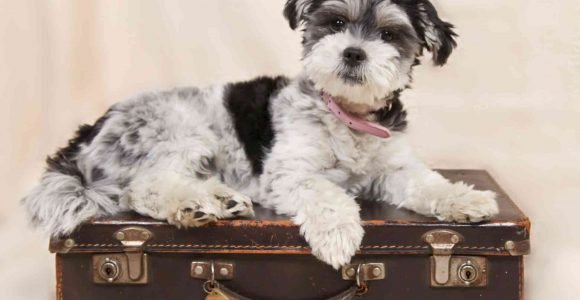 Want to Fly with a Pet? Here are Five Things to Keep in Mind